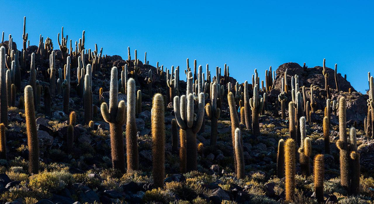 Isla del Pescado Salar de Uyuni Bolivia 2016 02 04 DD 37
