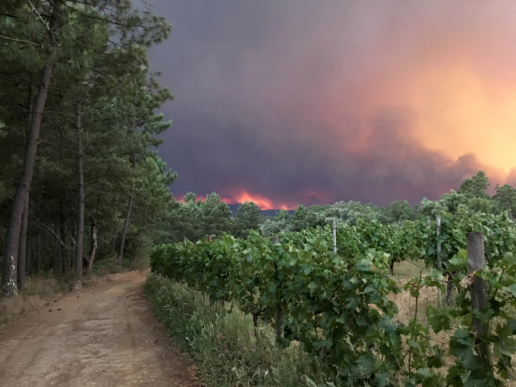 2017-06-18T005231Z 939750896 RC134311A1E0 RTRMADP 3 PORTUGAL-FIRE