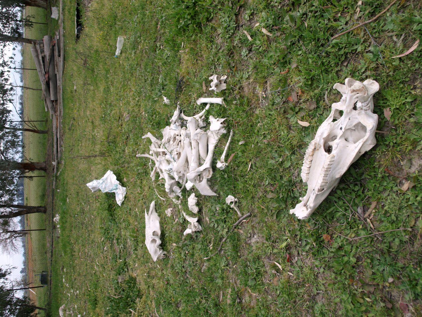 skeletoi