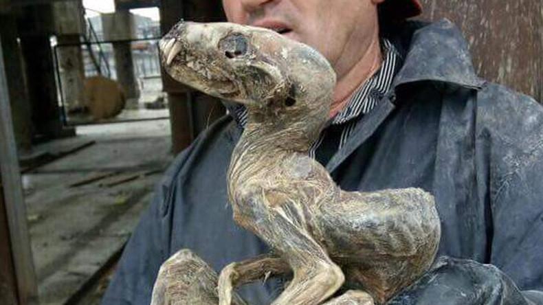 ccc - Σιβηρία: Απόκοσμα πλάσματα αποκαλύφθηκαν με το λιώσιμο των πάγων