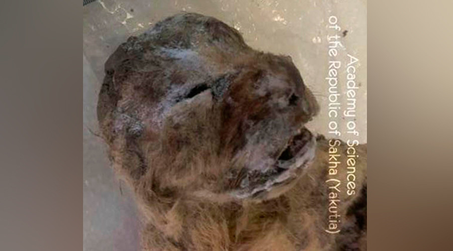 lino - Σιβηρία: Απόκοσμα πλάσματα αποκαλύφθηκαν με το λιώσιμο των πάγων