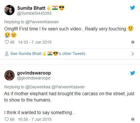 Το βίντεο που συγκλόνισε τoν πλανήτη: Ελέφαντες «κηδεύουν» το νεκρό ελεφαντάκι τους