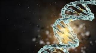 Για τις μηχανιστικές μελέτες επιδιόρθωσης του DNA το Νόμπελ Χημείας