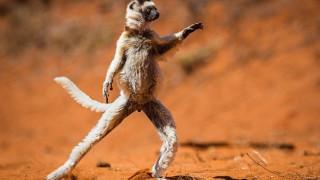 28 φωτογραφίες που θα σου φτιάξουν τη μέρα. Οι υποψηφιότητες του Comedy Wildlife Photography Awards
