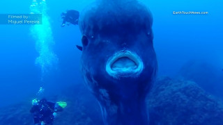 Ορθαγορίσκος: Ο άκακος γίγαντας των θαλασσών