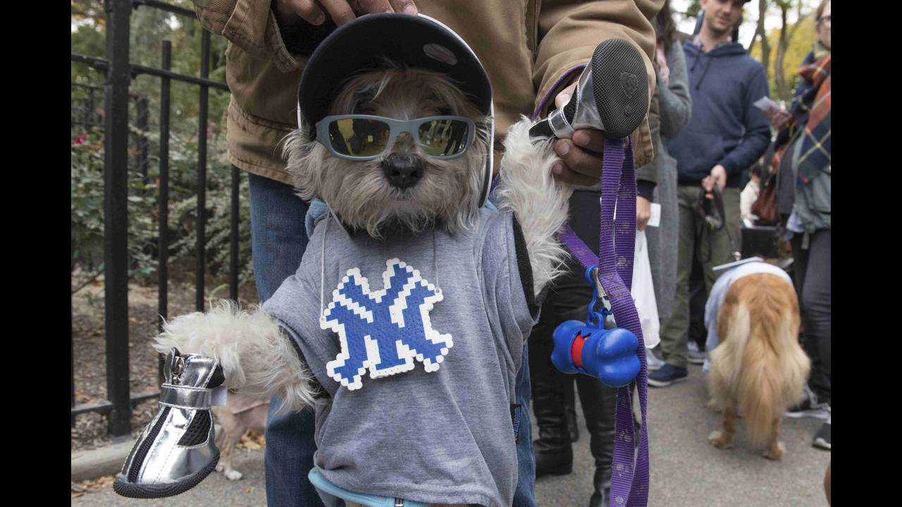 https://cdn.cnngreece.gr/media/news/2015/10/30/2711/photos/snapshot/USA-NEWYORK-DOG-PARADE--REUTERS-Stephanie-Keith.jpg