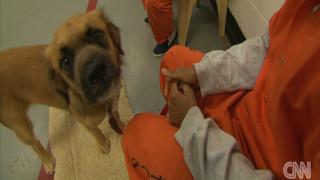 Δεσμοί ζωής μεταξύ κρατουμένων και αδέσποτων σκύλων