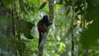 Χάνονται περισσότερα από τα μισά δέντρα του Αμαζονίου