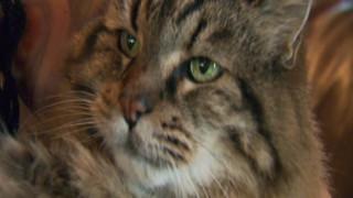 Ο γηραιότερος γάτος του πλανήτη