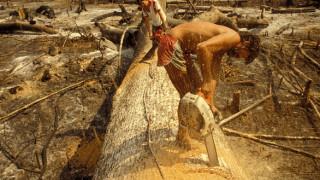 Δεν έχει τέλος η καταστροφή του δάσους του Αμαζονίου
