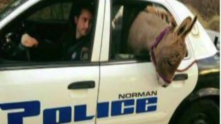 Συνελήφθη... γάιδαρος;