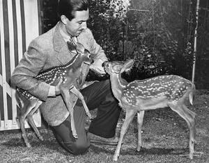 1942. Τα δύο μικρά ελάφια στην αγκαλιά του Γουόλτ υποδέχονταν τους επισκέπτες αλλά χρησιμοποιήθηκαν και σαν μοντέλα για το σχεδιασμό του Bambi.