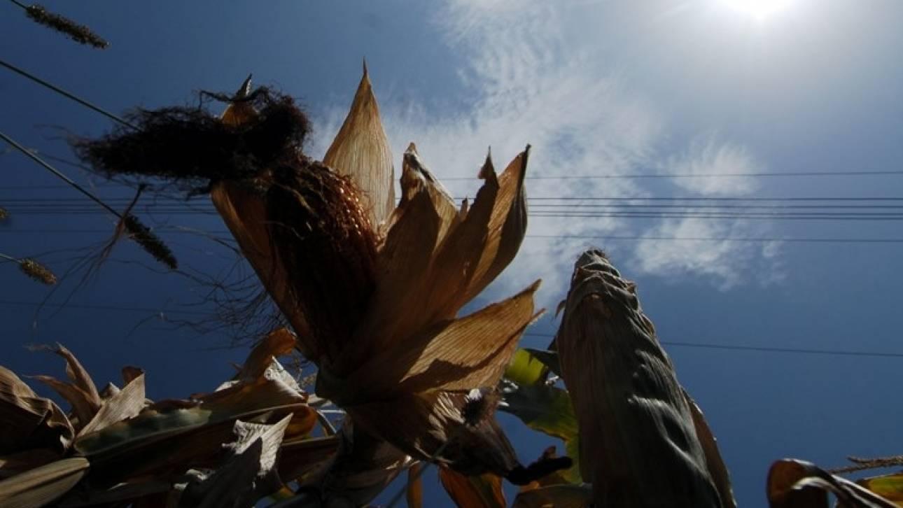 Σχέδιο νόμου από το ΥΠΕΝ για την καλλιέργεια μεταλλαγμένων