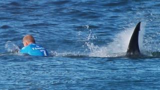 Σέρφερ σώθηκε από επίθεση καρχαρία