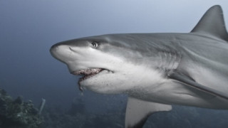 Τον κατασπάραξε καρχαρίας δευτερόλεπτα πριν τη διάσωση