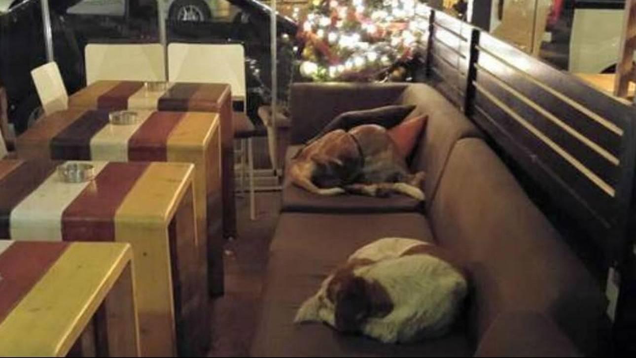 Καφετέρια στη Λέσβο φιλοξενεί κάθε βράδυ αδέσποτα σκυλάκια