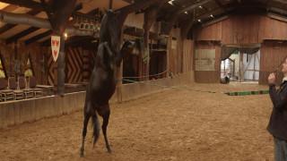 Εκπαιδεύοντας τα άλογα του Game of Thrones