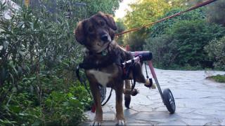 Γκρέτα: Η ανάπηρη σκυλίτσα των Εξαρχείων