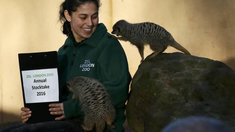 Λονδίνο: Οι «παρενοχλήσεις» στους υπαλλήλους του ζωολογικού κήπου