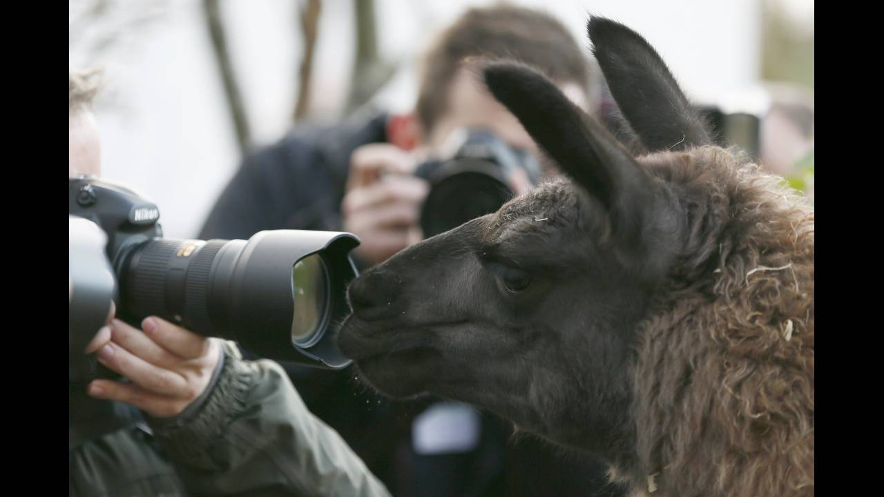https://cdn.cnngreece.gr/media/news/2016/01/05/17496/photos/snapshot/BRITAIN-ANIMALS2.jpg