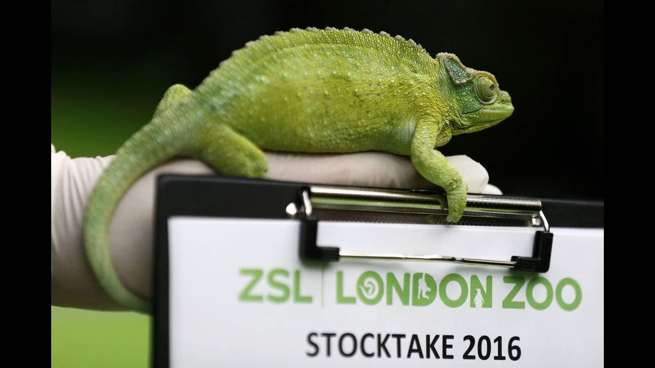 https://cdn.cnngreece.gr/media/news/2016/01/05/17496/photos/snapshot/BRITAIN-ANIMALS4.jpg