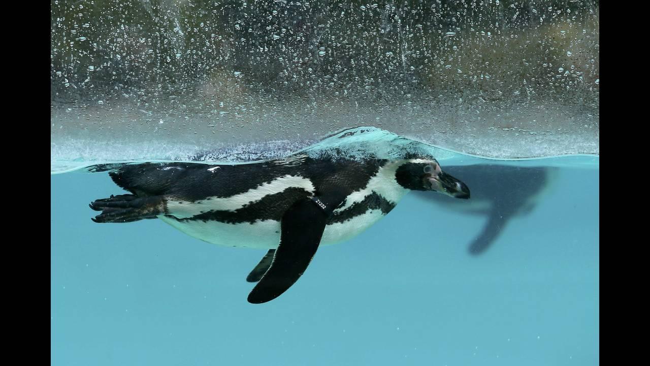 https://cdn.cnngreece.gr/media/news/2016/01/05/17496/photos/snapshot/BRITAIN-ANIMALS7.jpg
