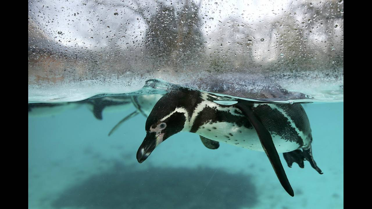 https://cdn.cnngreece.gr/media/news/2016/01/05/17496/photos/snapshot/BRITAIN-ANIMALS8.jpg