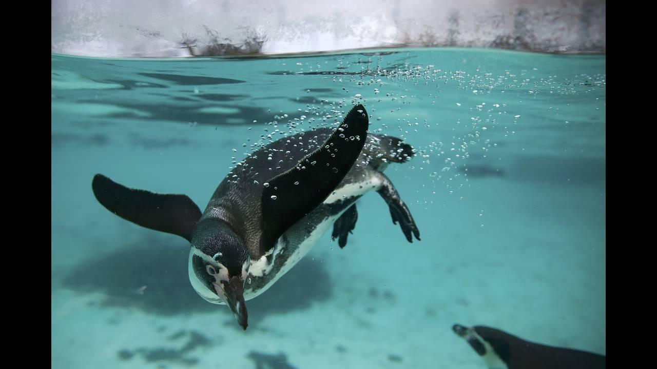 https://cdn.cnngreece.gr/media/news/2016/01/05/17496/photos/snapshot/BRITAIN-ANIMALS9.jpg