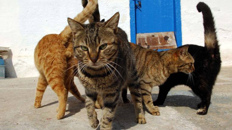 Γάτες: Οι ναζιάρες θεές της Ελλάδας