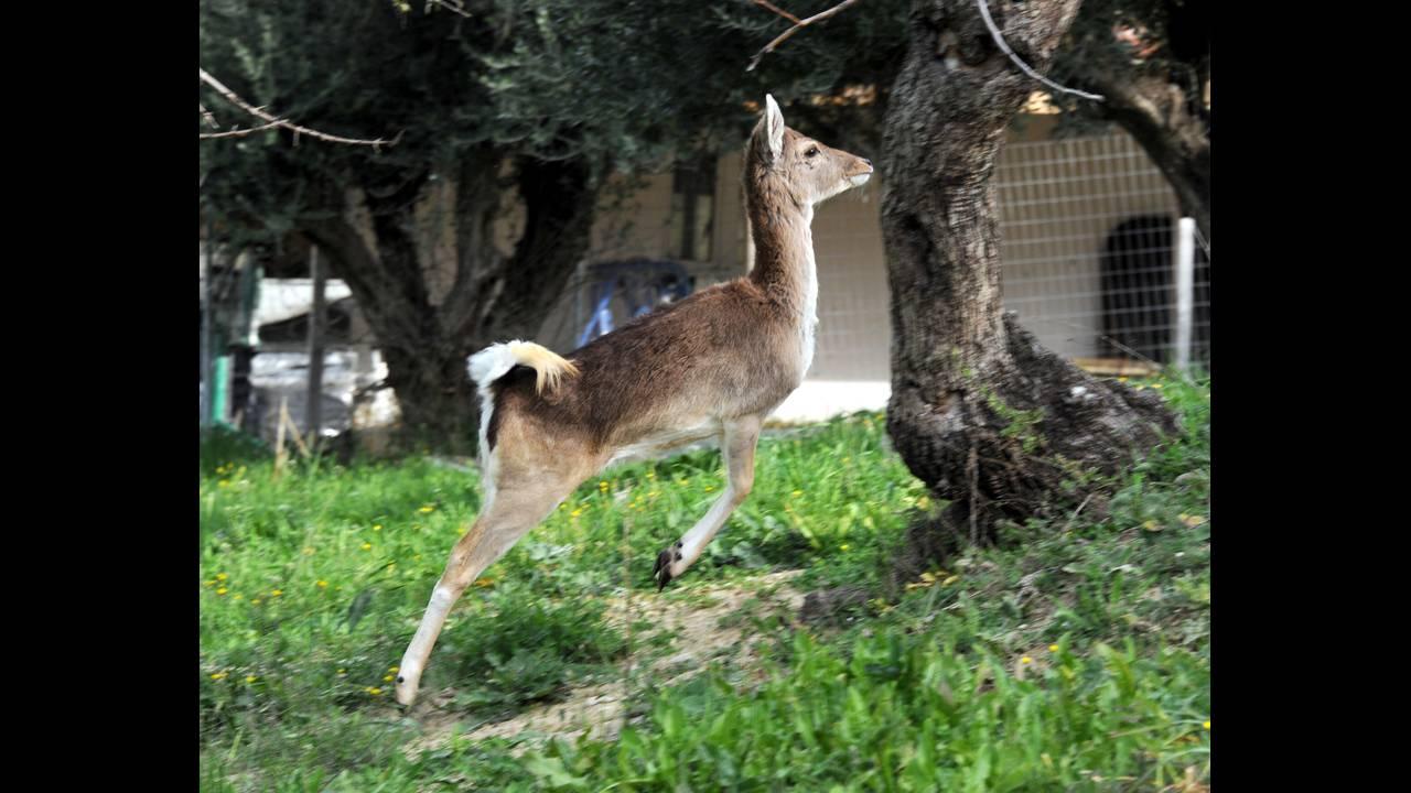 https://cdn.cnngreece.gr/media/news/2016/01/11/18150/photos/snapshot/nikolopoulos-antonis2.jpg