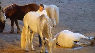 Οι απίστευτες κινήσεις των... μαγνητισμένων αλόγων στα χέρια Γάλλου γητευτή