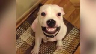 Ένα σκυλίσιο χαμόγελο που γίνεται viral!