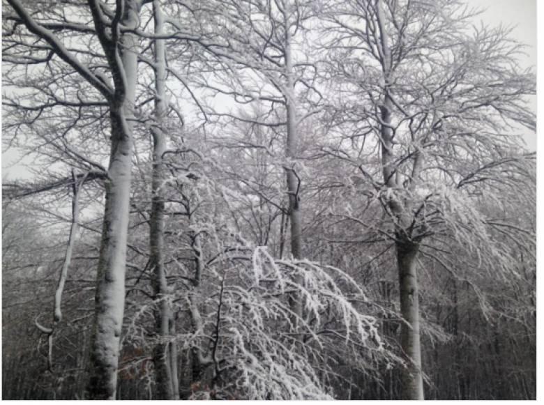 Πού χτυπάει η κακοκαιρία- σε ποιες περιοχές χιονίζει