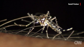 Ζίκα: Ο νέος θανατηφόρος ιός
