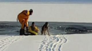 Μωρό σκυλάκι σώζεται από παγωμένη λίμνη
