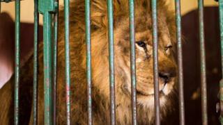 Άγρια ζώα λιμοκτονούν κλεισμένα σε μικροσκοπικά κλουβιά (pics)