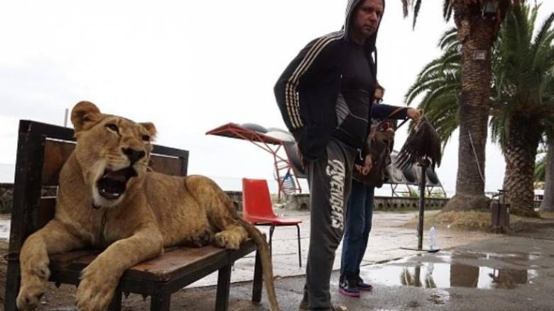 Λιοντάρι δραπέτευσε από σπίτι και προκάλεσε πανικό
