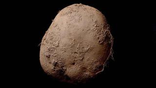 Αυτή η πατάτα αξίζει 1 εκατομμύριο ευρώ. Γιατί;