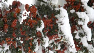 Χιονιάς: τρόποι προστασίας φυτών και κήπων