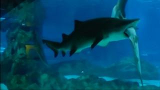 Καρχαρίες... κανίβαλοι σε ζωολογικό πάρκο της Σεούλ