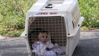 Πτώμα γυναίκες και δύο μαϊμουδάκια σε μοτέλ της Φλόριντα