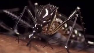 Παγκόσμια ανησυχία για την εξάπλωση του ιού Ζίκα