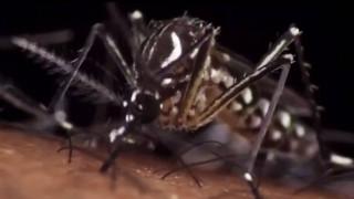 Φόβοι ειδικών για ραγδαία εξάπλωση του Ζίκα το καλοκαίρι