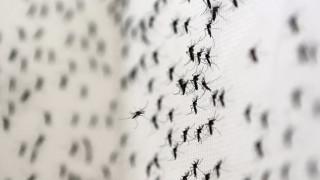 Βραζιλία: Σε ούρα και σάλιο από ασθενείς εντοπίστηκε ο ιός Ζίκα