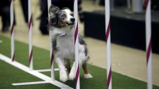 Τεστ IQ μετρά τη νοημοσύνη των σκύλων