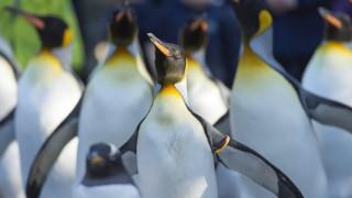 Ένα παγόβουνο εξολόθρευσε μια αποικία πιγκουίνων στην Ανταρκτική