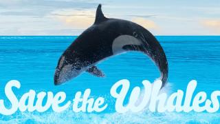 Αυτό το Φεβρουάριο βλέπεις πορνό για να σώσεις τις φάλαινες