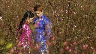Βιετνάμ: Άνθη ροδακινιάς για το νέο σεληνιακό έτος