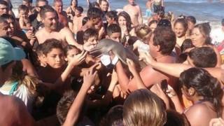 Η ανθρώπινη ανοησία «σκότωσε» νεαρό δελφίνι