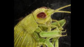 Φωτογράφος απεικονίζει τους «αόρατους συγκατοίκους» μας, τα έντομα